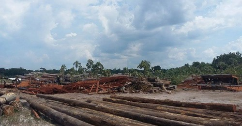 "FAO funds feasibility study for Consolidated Log Yard to sell ""legally produced timber"""