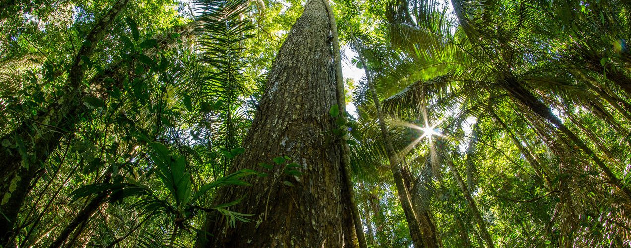 New public-private coalition launched to mobilize more than $1 billion to protect tropical forests and enhance global climate action